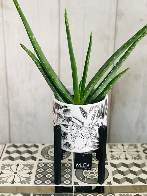 Aloe Vera in Cheetah Pot with Stand