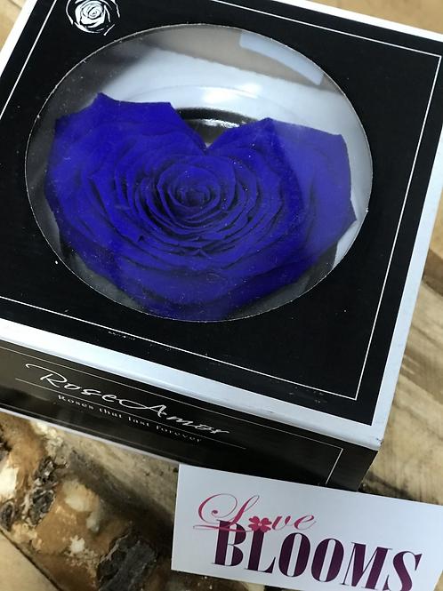 Forever Heart Rose Blue