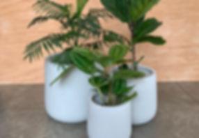white cylinder pots.jpeg