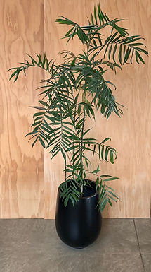 Palm pot with bamboo palm