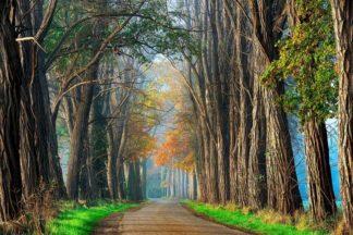 Acacias in Autumn