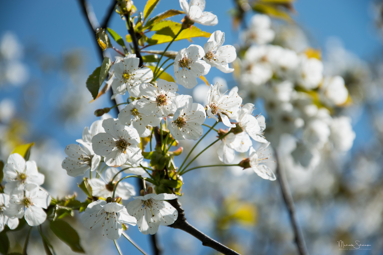 35_Spring_white_2