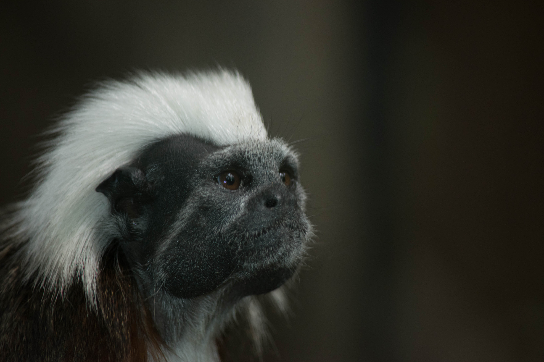 14_Monkey