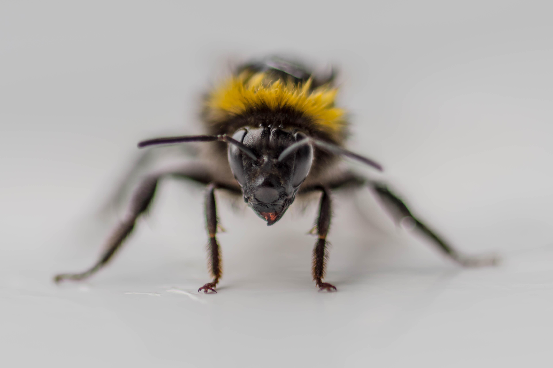 16_Wet bumblebee