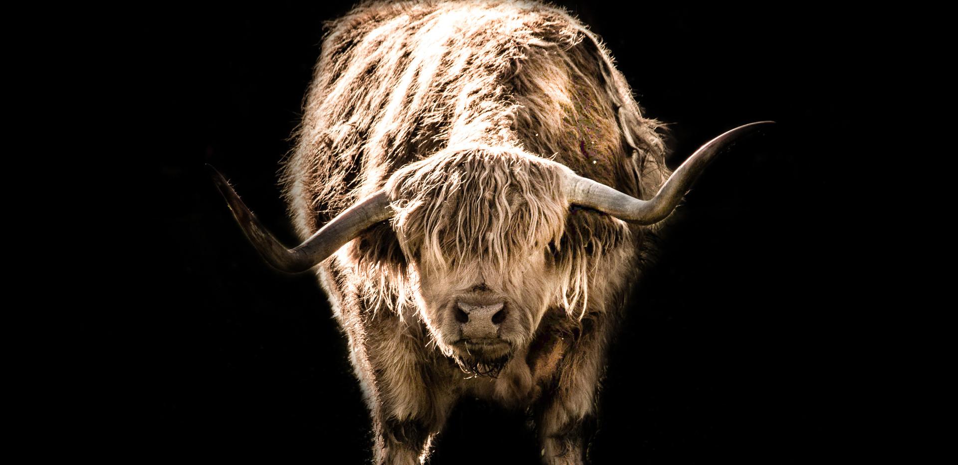 Highlandrind 3