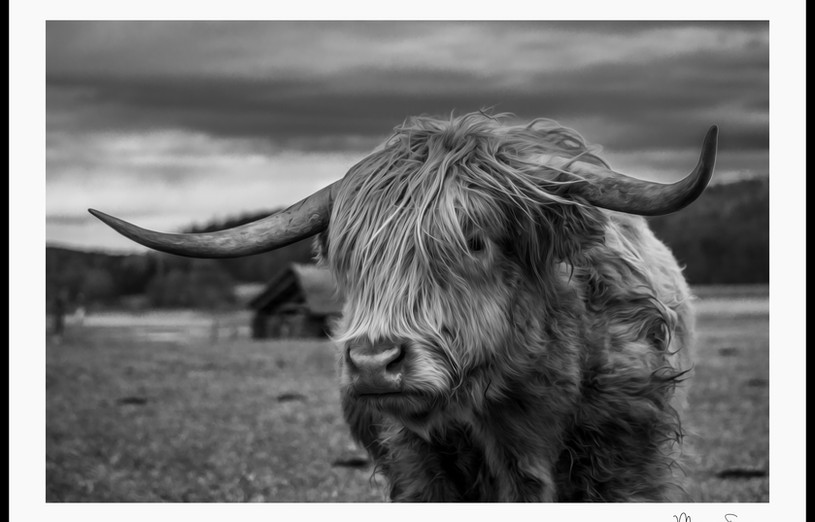 Highlandrind_1