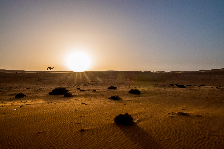 Wahiba Desert_8