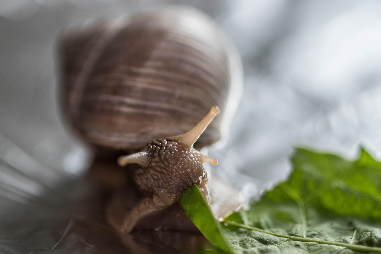 15_Snail