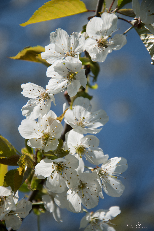 34_Spring_white_1