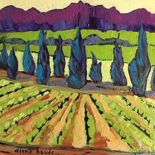 Le vignoble Châteauneuf-du-Pape / The Châteauneuf-du-Pape vineyard
