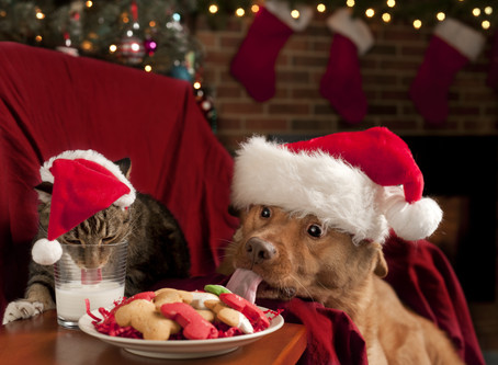 Festive but Safe | Guide to Christmas cheer and fur kids