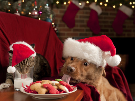 Festive but Safe   Guide to Christmas cheer and fur kids