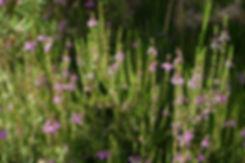 La petite école dans la forêt Fleurs de bach