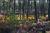 La petite école dans la forêt Formations en Fleurs de Bach