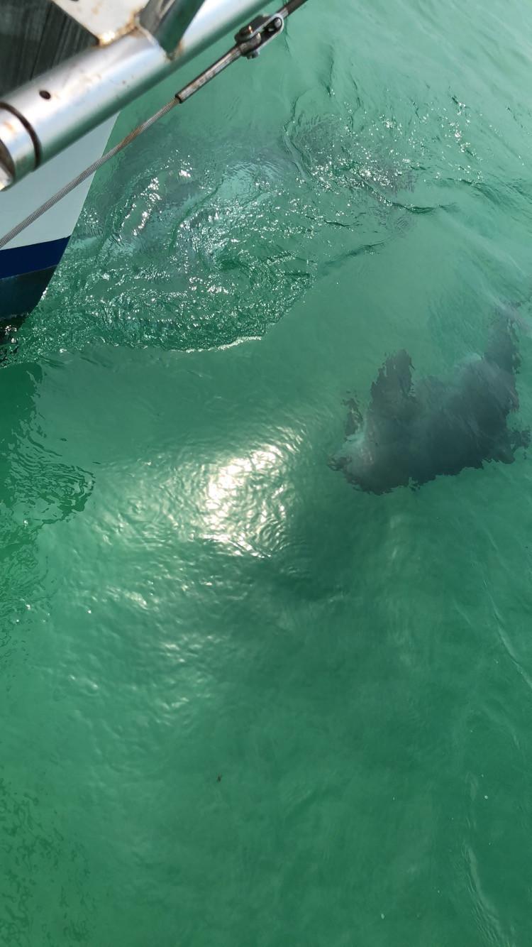 fall break, Destin florida, dolphins, sailing, sailboat, private sailing cruise, fair winds sailing co, dolphin cruise