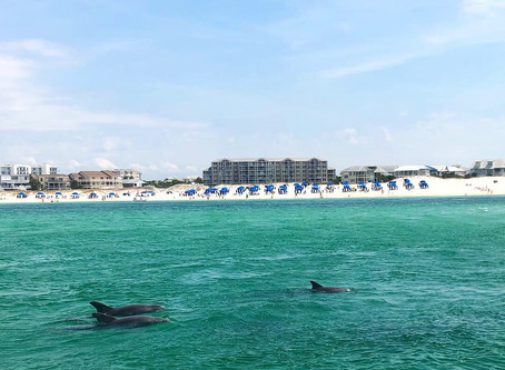 Getting The Most Out of Your Destin Dolphin Cruise.