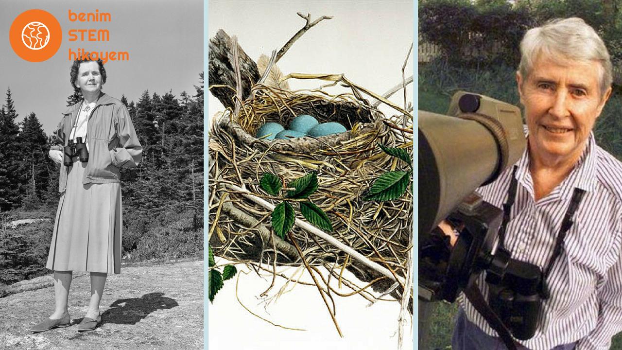 Özel Dosya/Ornitolog Bilim Kadınları