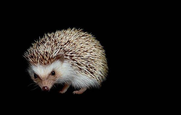 haber-hayvanlar-neden-gececi-oldu-post.j
