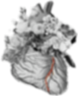 flower heart BW with LAD in red.png