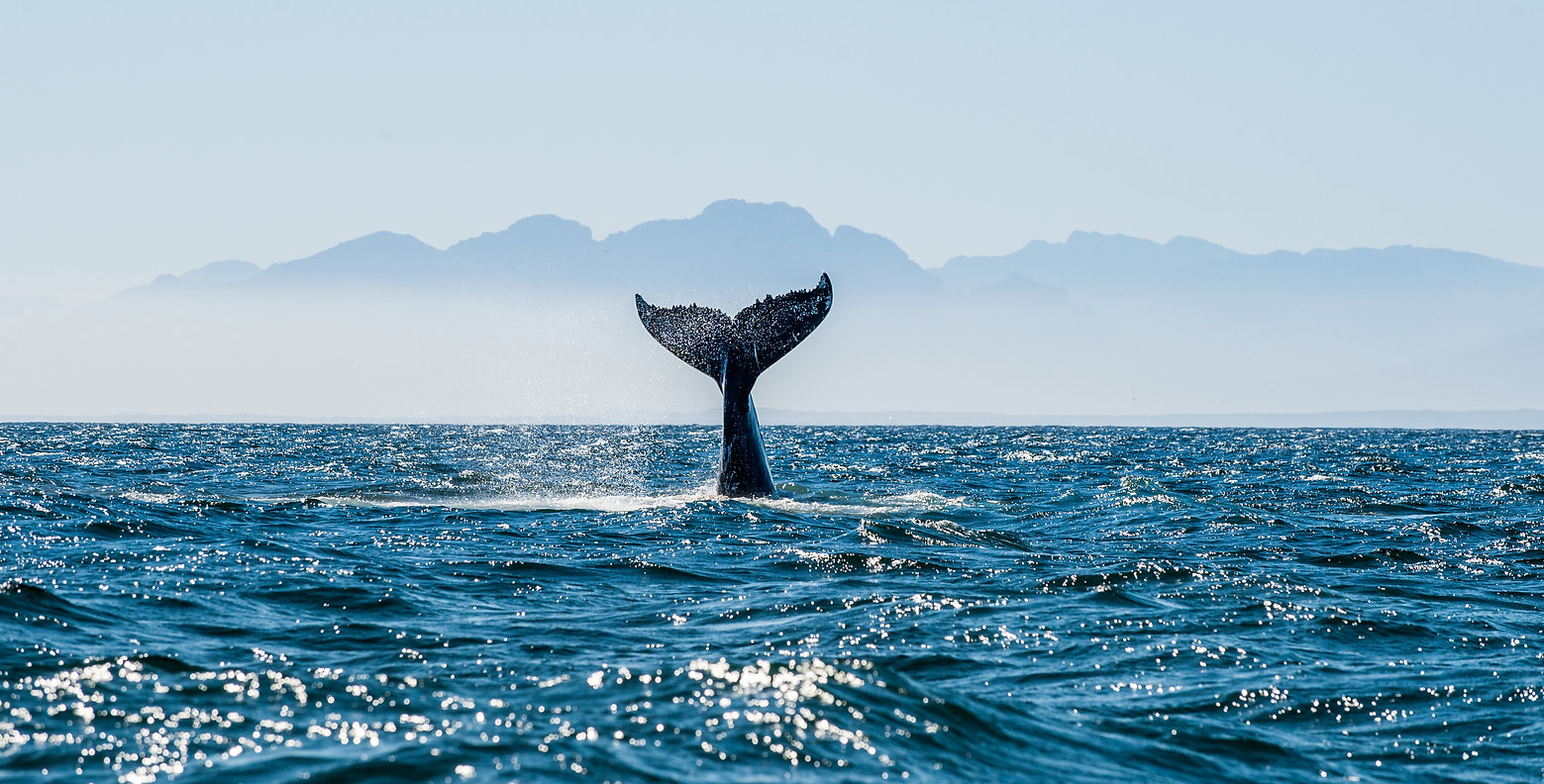 Seascape with Whale tail. The humpback w