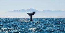 Whale Accounts