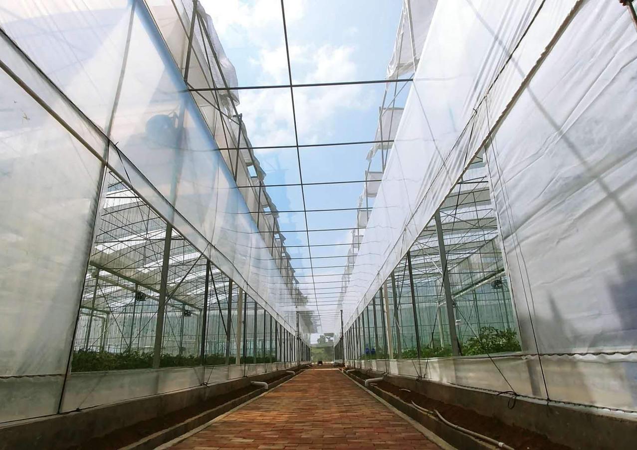 水耕生產基地