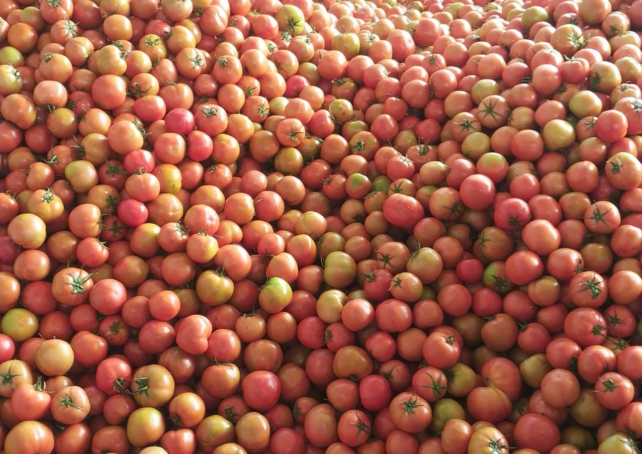 番茄物流中心