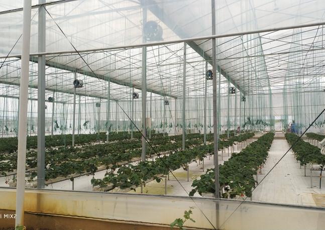 水耕瓜果生產基地