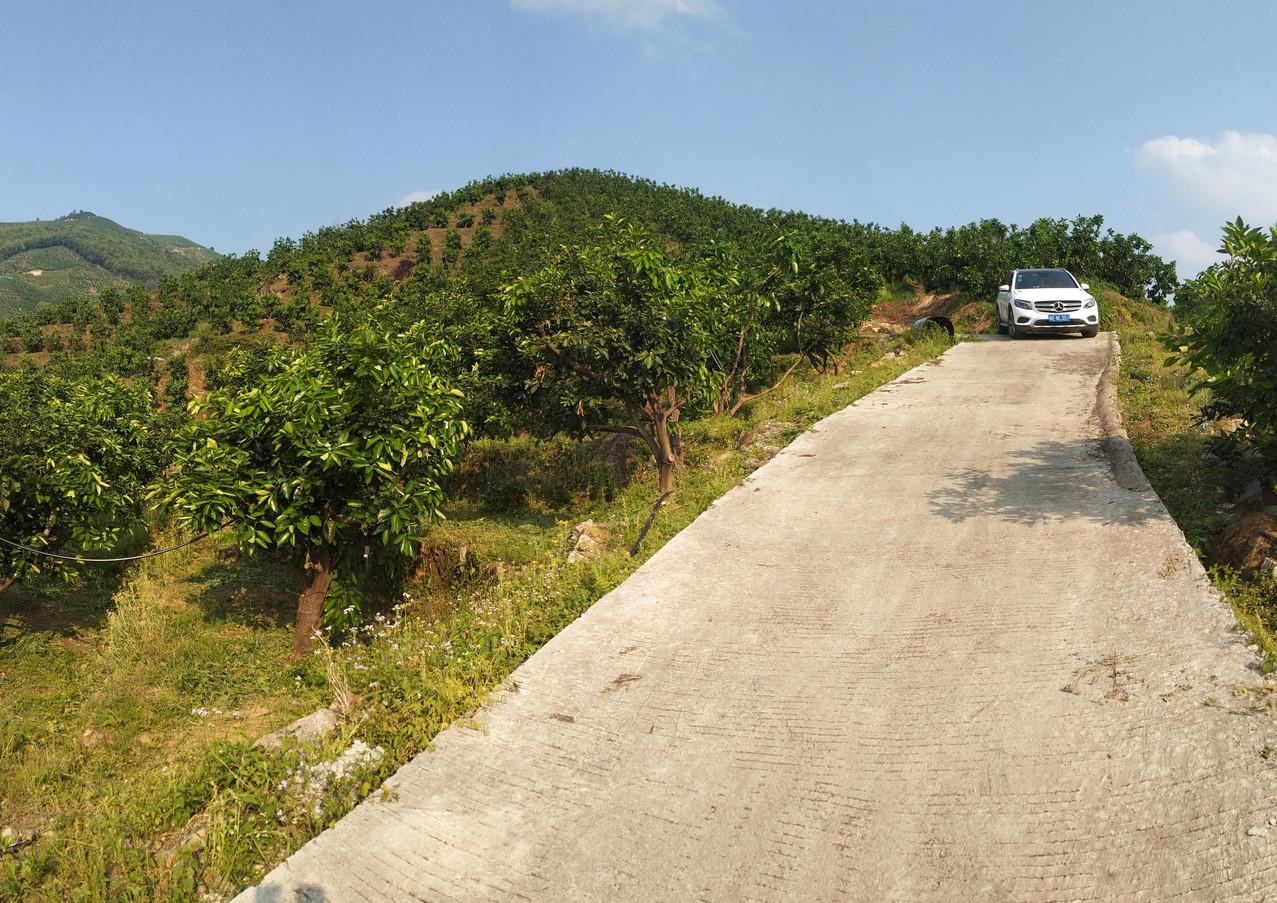 葡萄柚生產基地