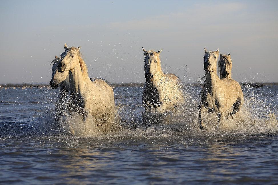 horses-1401707_1920.jpg