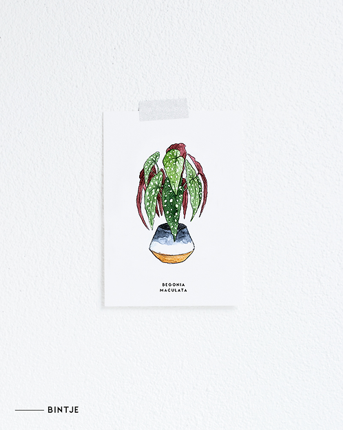 Postcard Begonia plant