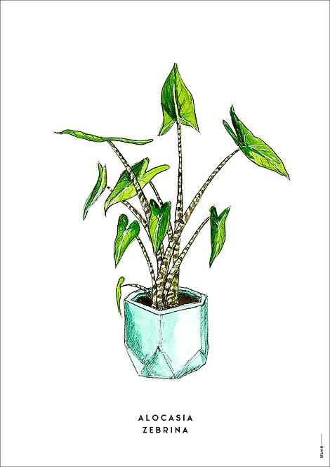 Poster Plant Alocasia A4