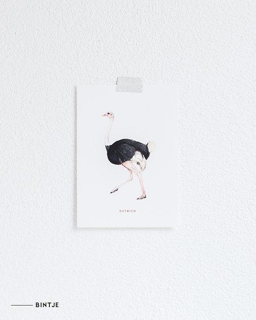 Postcard Struisvogel