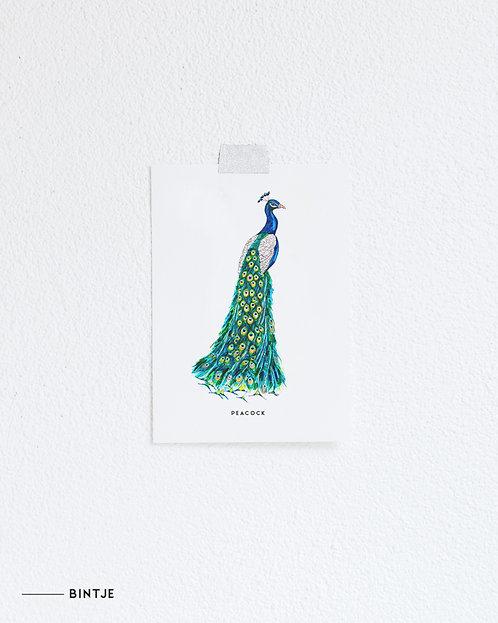 Postcard Pauw