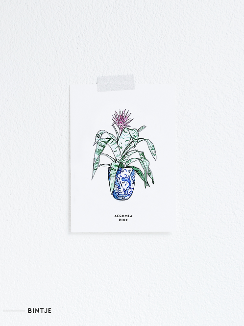 Postcard Aechmea plant