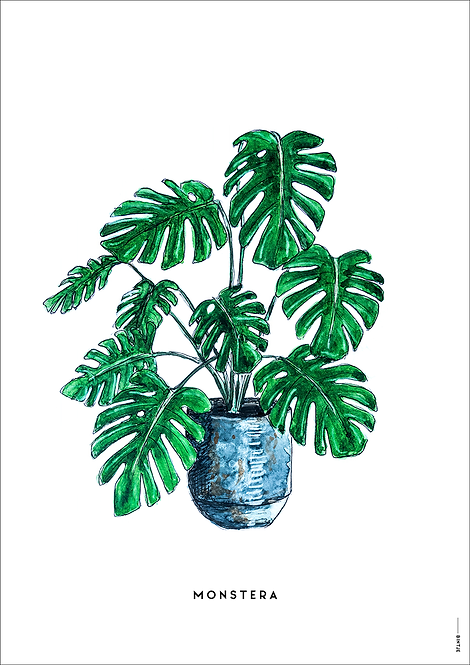 Poster Plant Monstera A4