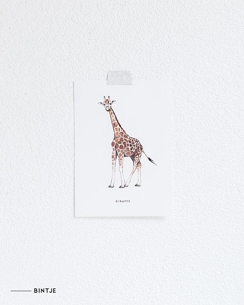 Postcard Giraf