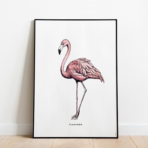 Poster Flamingo 50x70