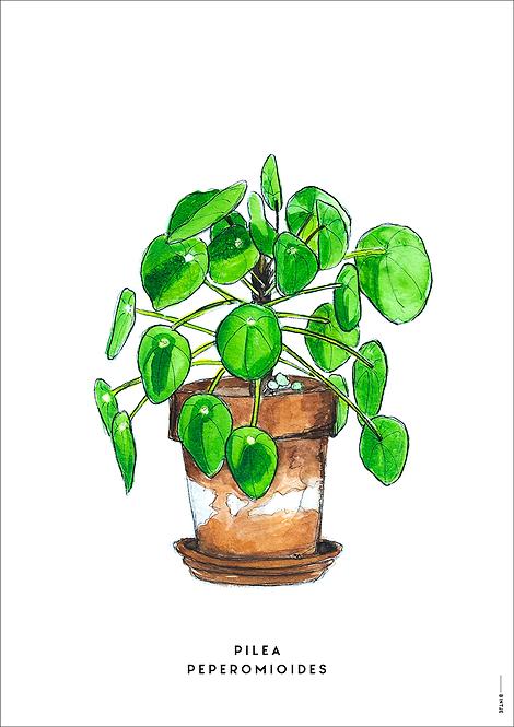Poster Plant Pilea A4