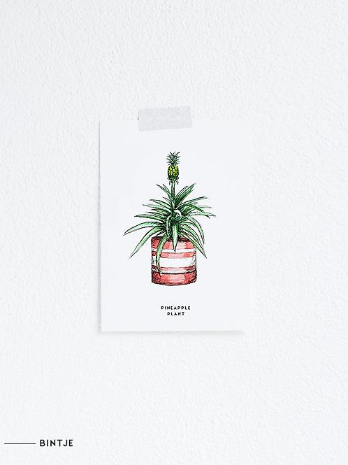 Postcard Ananasplant
