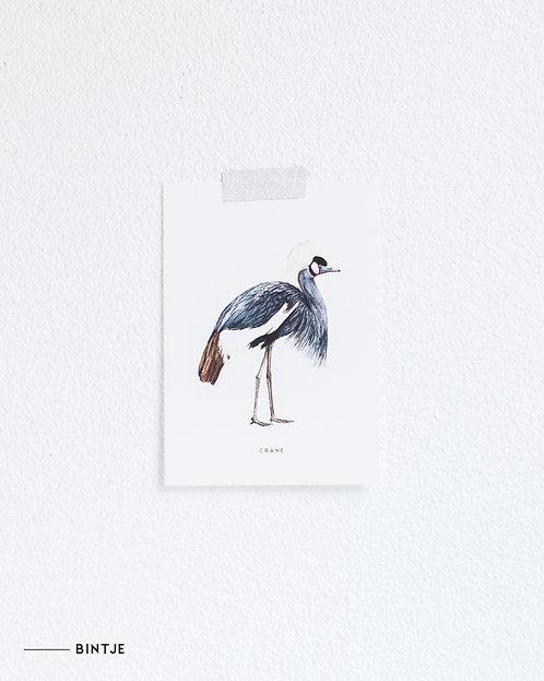Postcard Kraanvogel