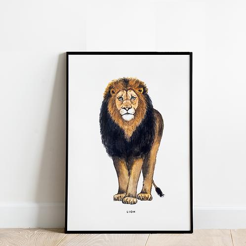 Poster Leeuw 30x40