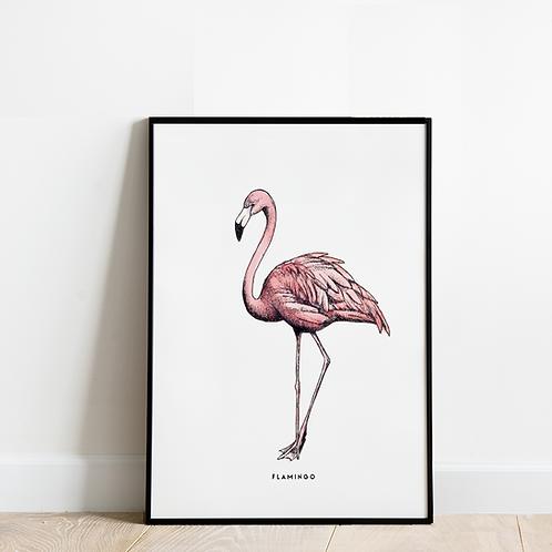 Poster Flamingo 30x40