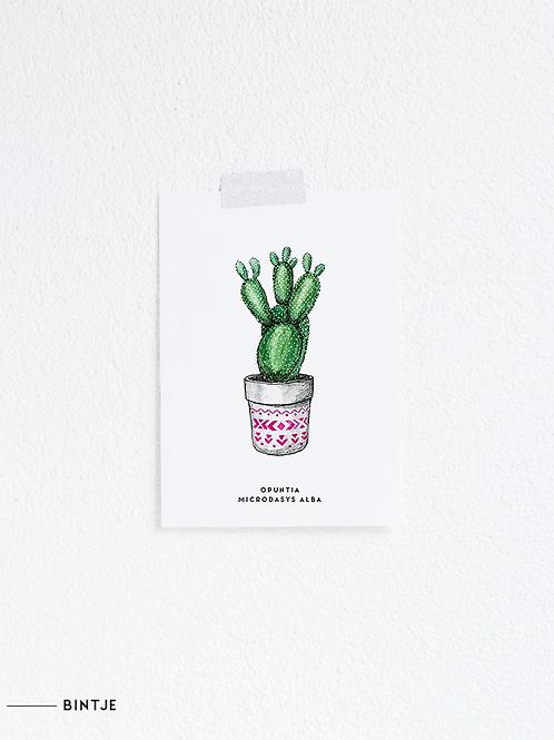 Postcard Cactus plant