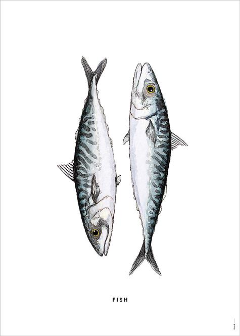 Poster Vissen