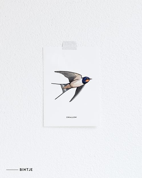 Postcard Zwaluw