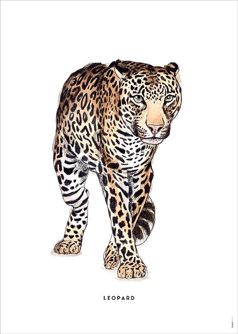 Poster Luipaard