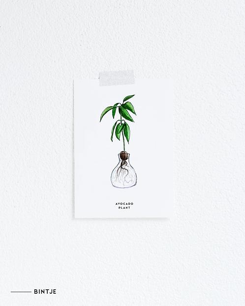 Postcard Avocado Plant