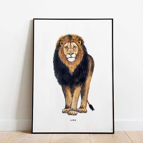 Poster Leeuw 50x70