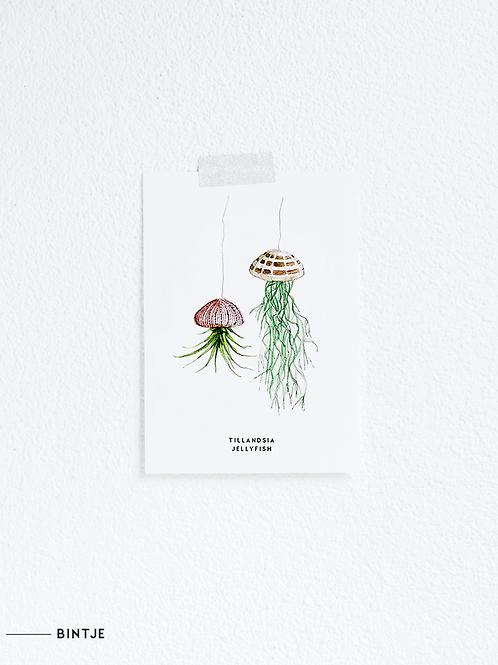 Postcard Tillandsia Plant